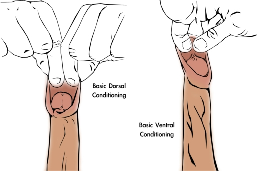 foreskin-restoration-basic-manual-tugging-method-3
